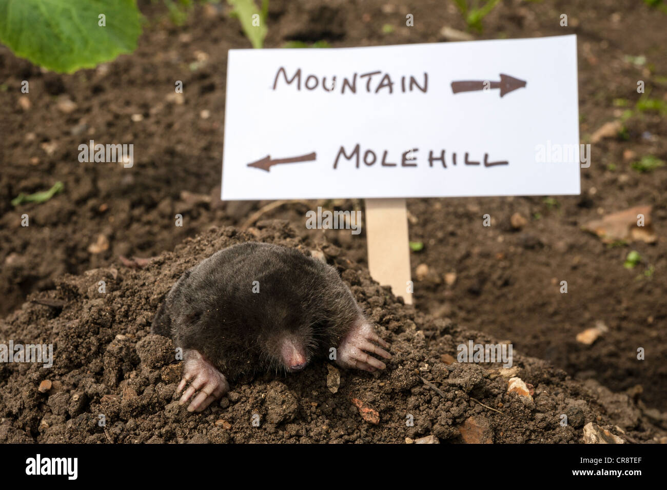 a-mole-making-a-mountain-out-of-a-molehill-CR8TEF.jpg