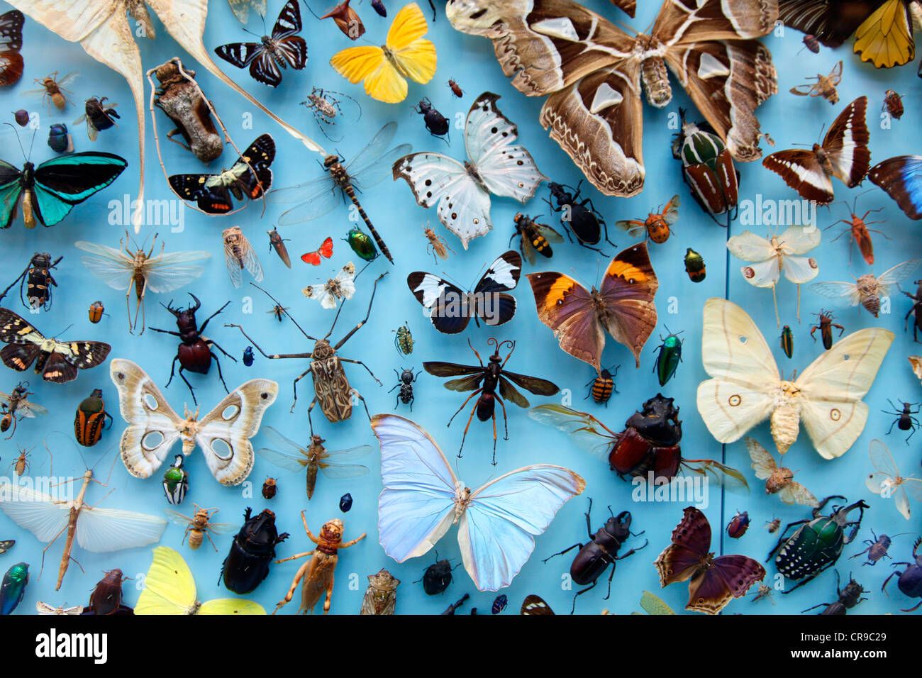 Genial Collection Of Insects, Moths, Butterflies, Beetles From Around The World,  The University Museum Of Natural History, Oxford