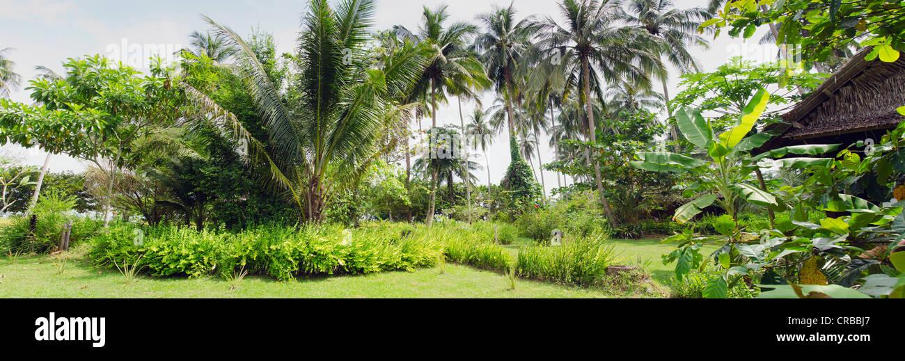 Tropical Palm Garden Lom Lae Resort Koh Yao Noi Phang Nga Stock Photo Royalty Free Image