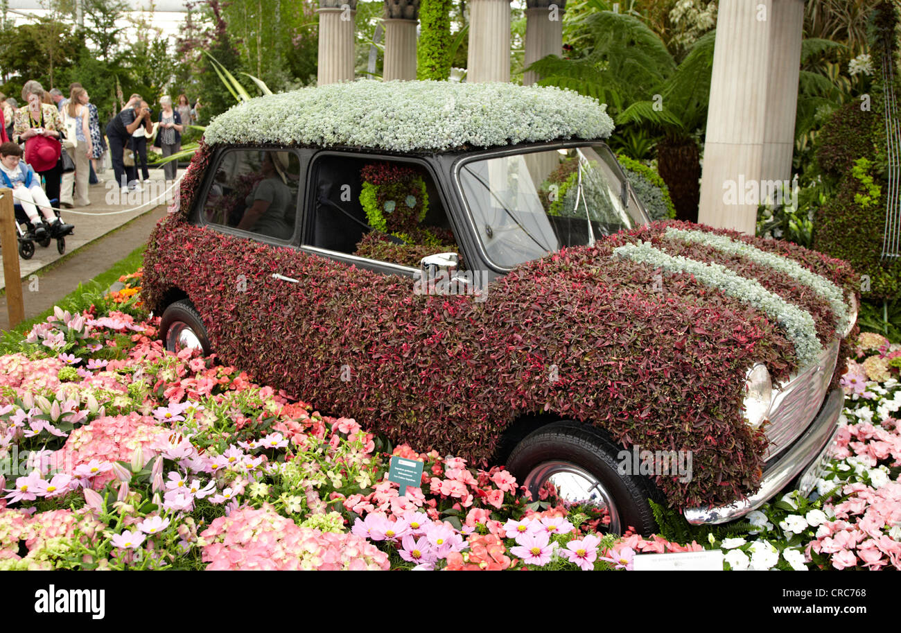 Flower Mini At The Chelsea Flower Show London UK Stock Royalty Free Im