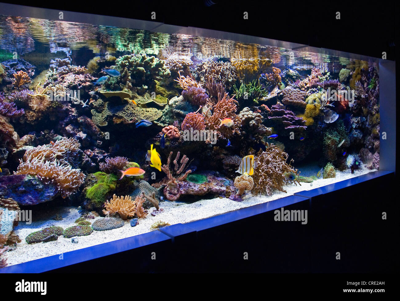 Tropical coral reef aquarium with small fishes corals and for Saltwater fish for small tank