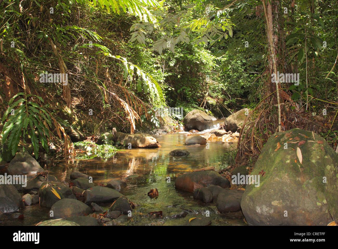 Khao Sok Nationalpark - Jungle Adventure South East Asia