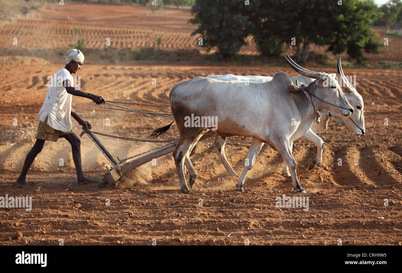 Indian farmer working in his field Andhra Pradesh South ...