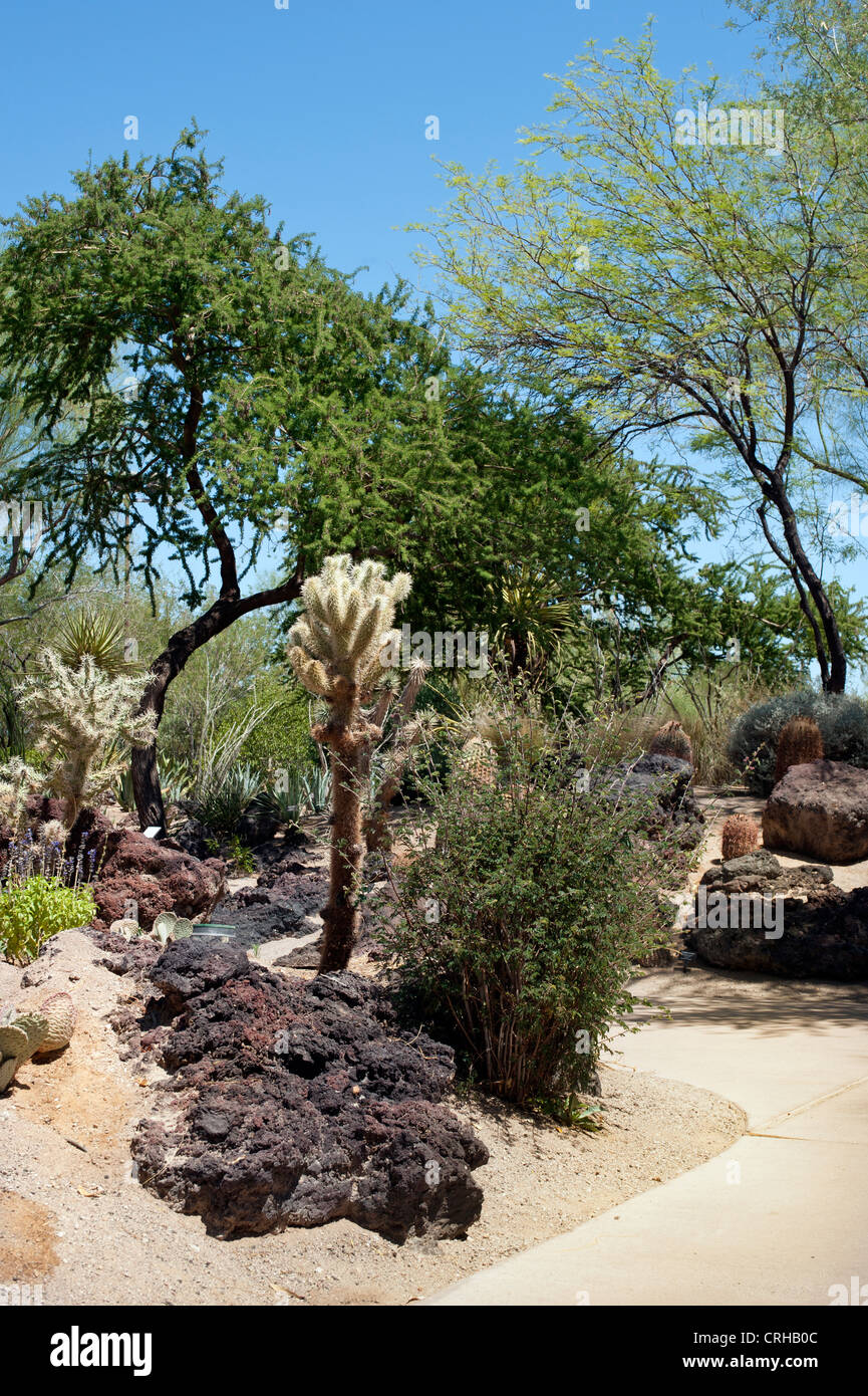 Botanical Gardens at the Ethel M Chocolate Factory in Henderson ...