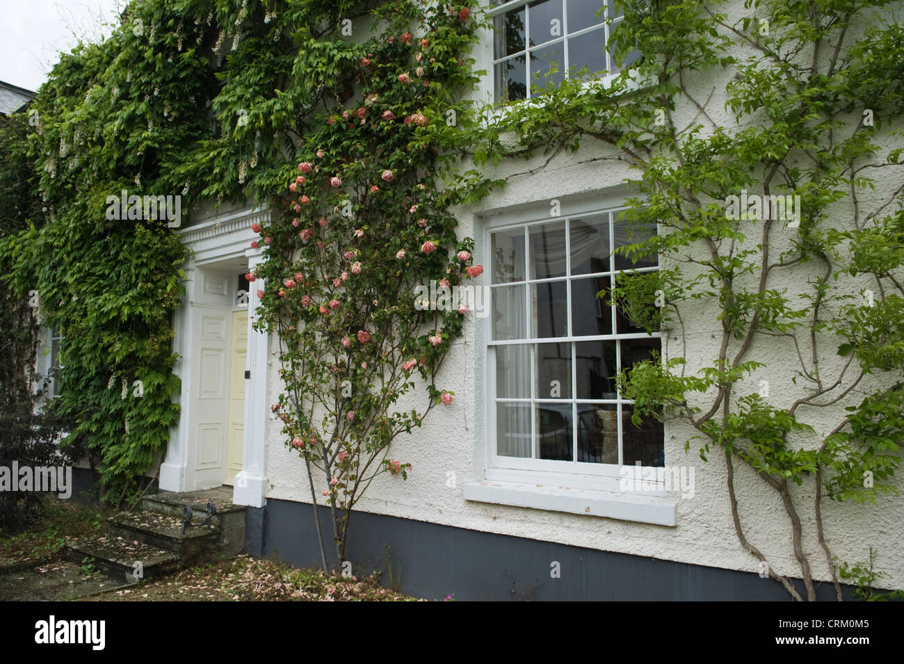 Large Period House With Sash Windows And Climbing Plants