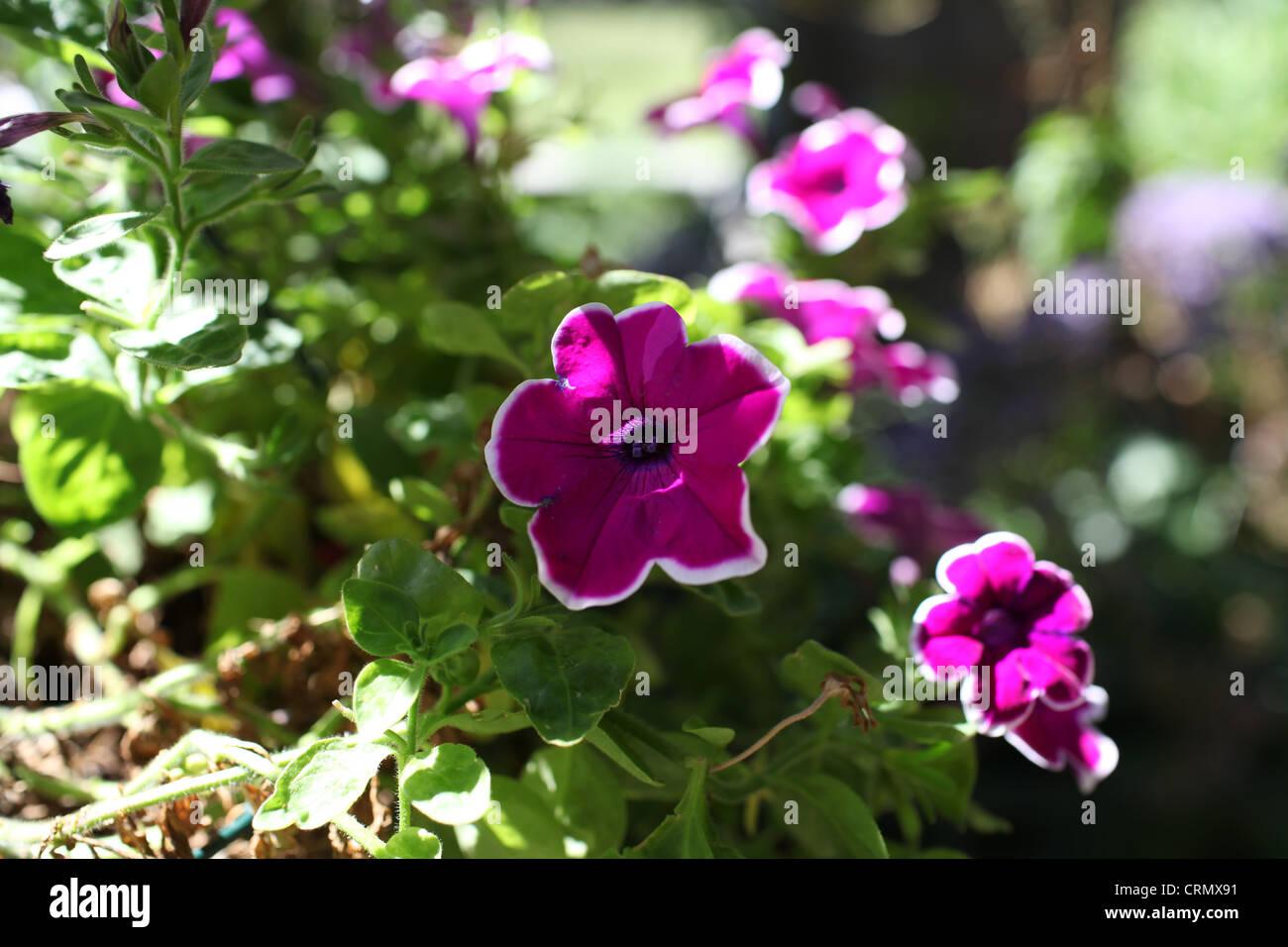 Purple flowers at orchid gardens jardines de orquideas for Jardines de orquideas