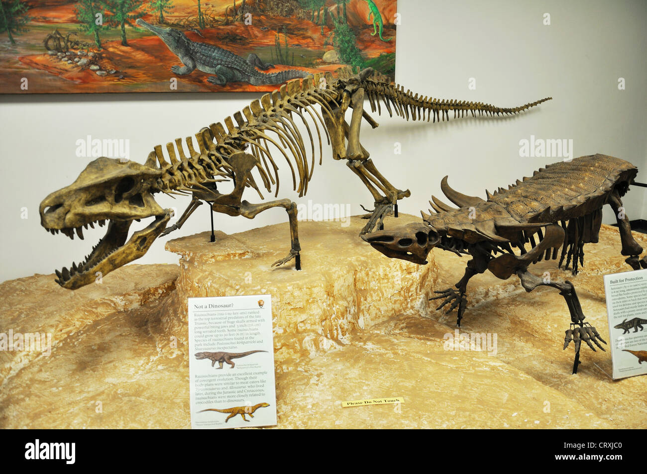 Desmatosuchus | Walking With Wikis | FANDOM powered by Wikia