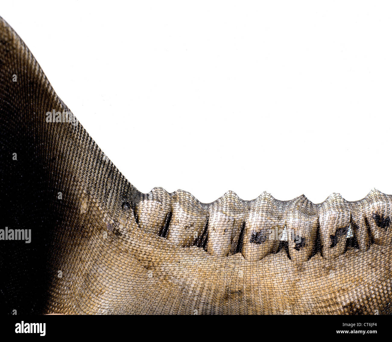 Jawbone with network stock photo 49318728 alamy jawbone with network biocorpaavc Image collections