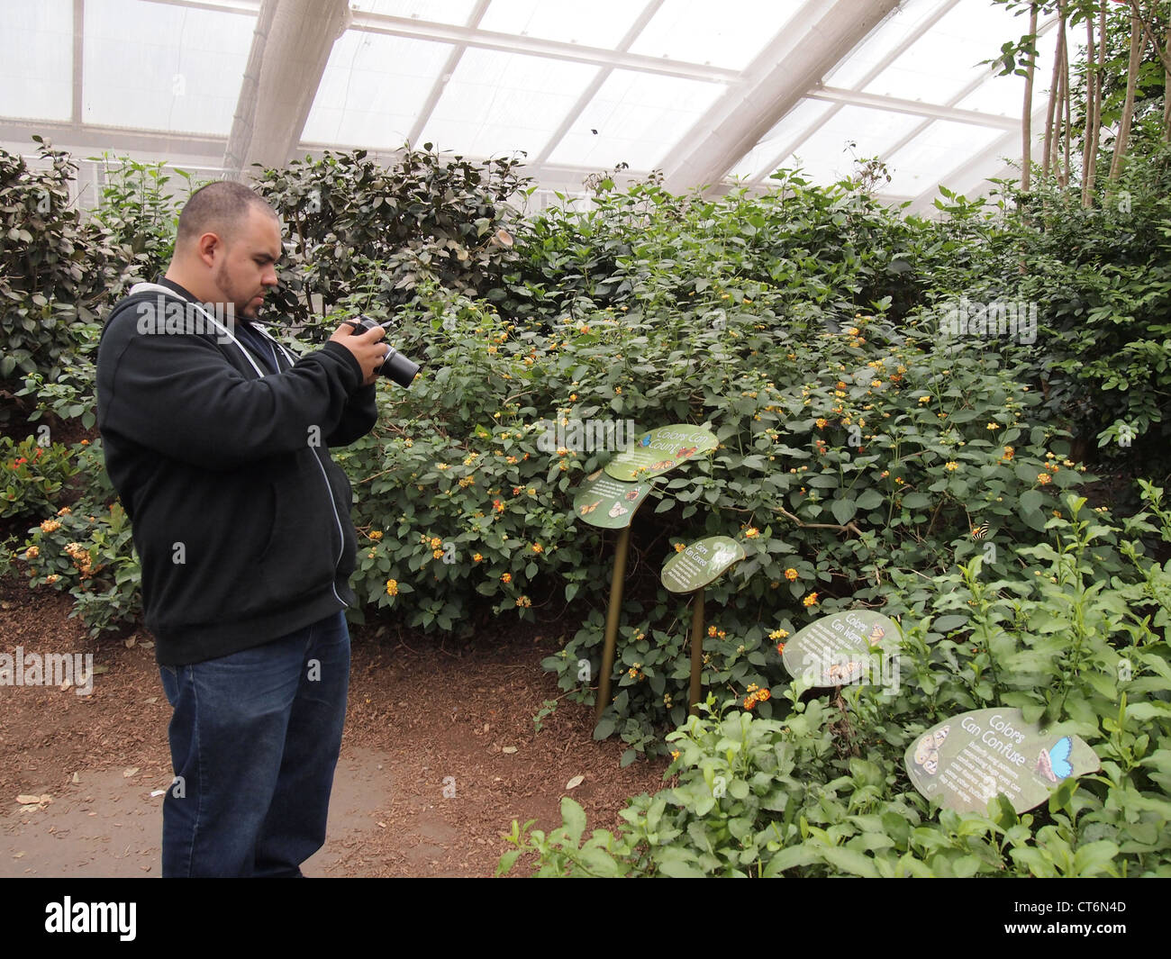 Superieur Man Photographing Butterflies At The Bronx Zoo Butterfly Garden, Bronx, New  York, USA