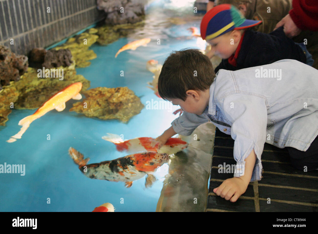 Berlin children fondle koi fish in the aquarium berlin for Koi im aquarium