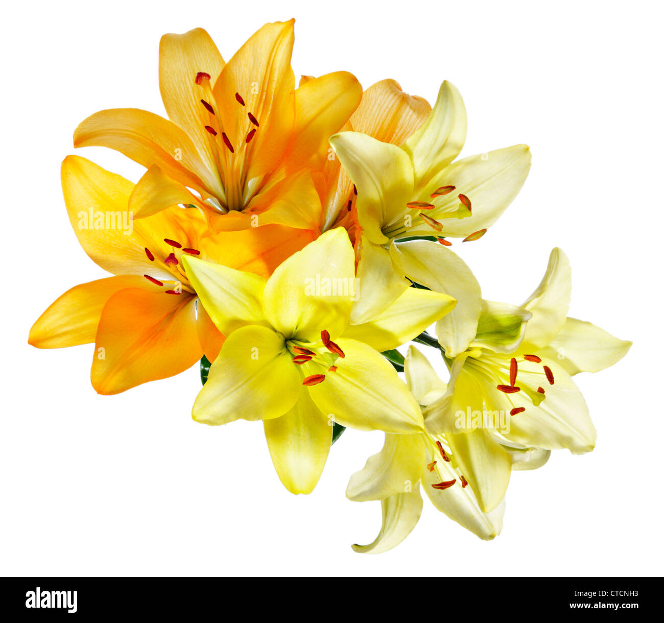 Flowers yellow lilies on a white background top view stock photo plan view of flowers orange and white yellow lilies on a white background dhlflorist Image collections