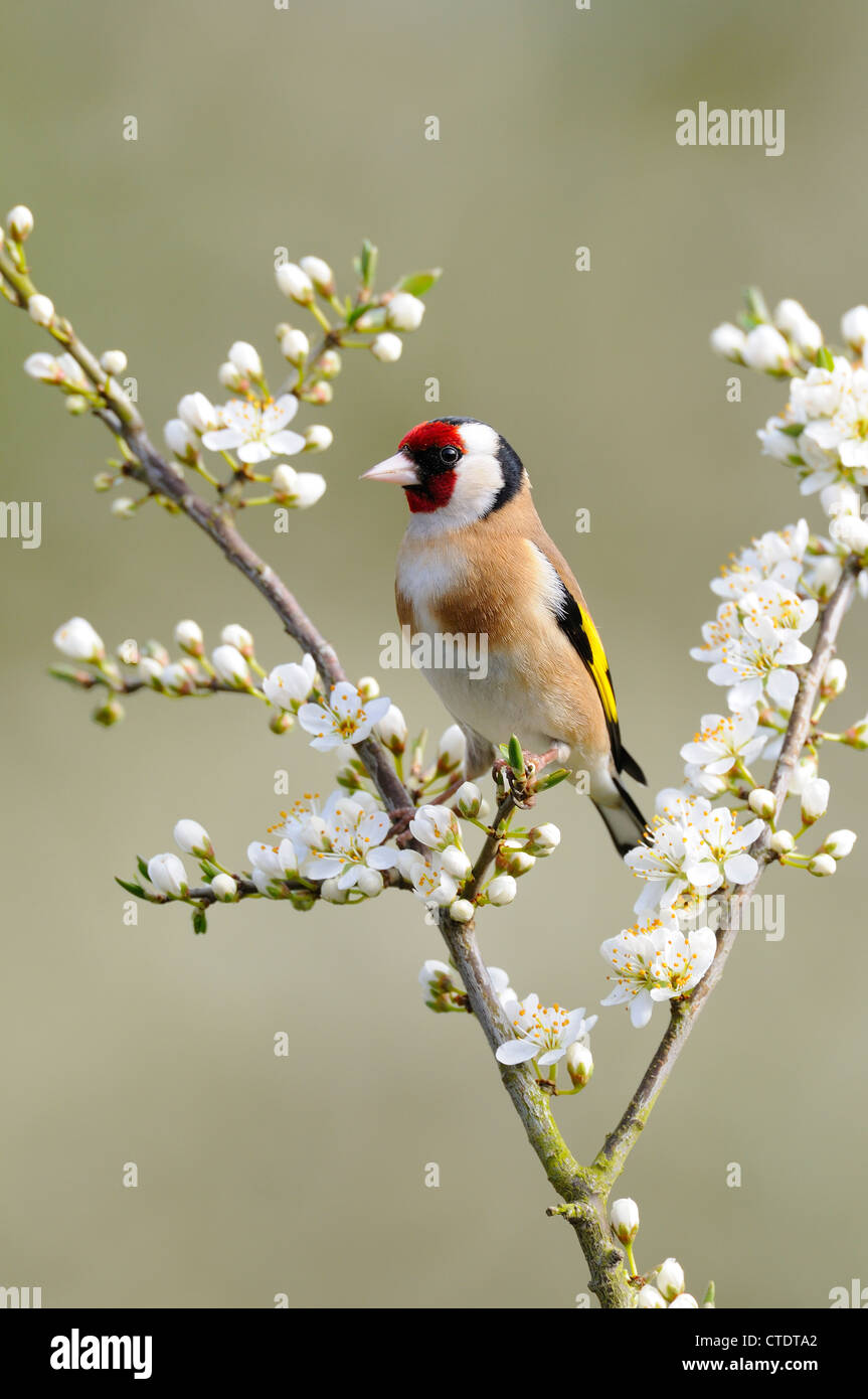Bring on the Birds: Attract Birds With These Trees and Plants ...