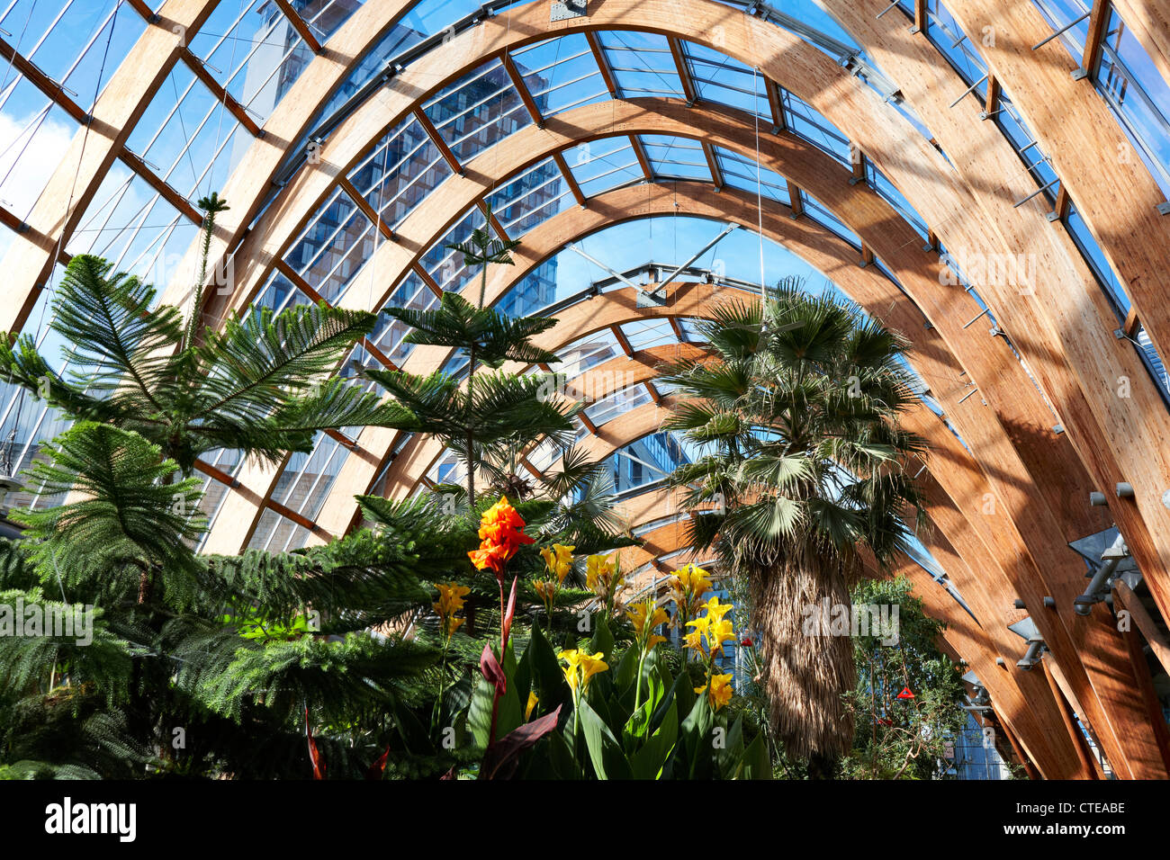 winter gardens sheffield interior view of the temperate