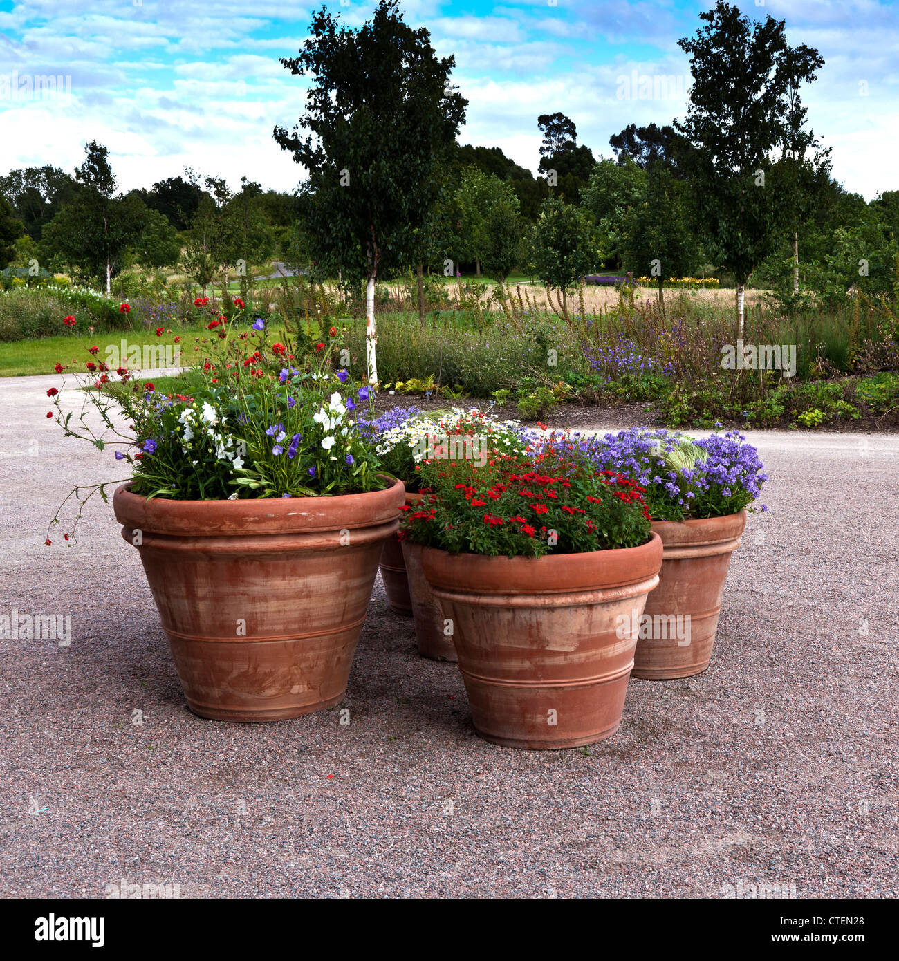 Large Terracotta Pots Containing Summer Flowers Close To Visitor Centre At  RHS Hyde Hall Gardens