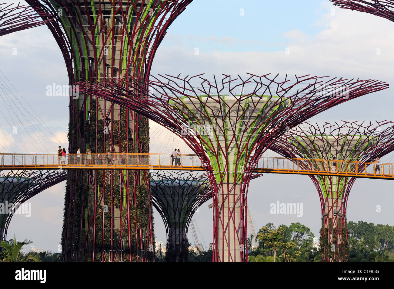 Sky Garden Walk: Supertree Grove And Sky Walk At Gardens By The Bay In