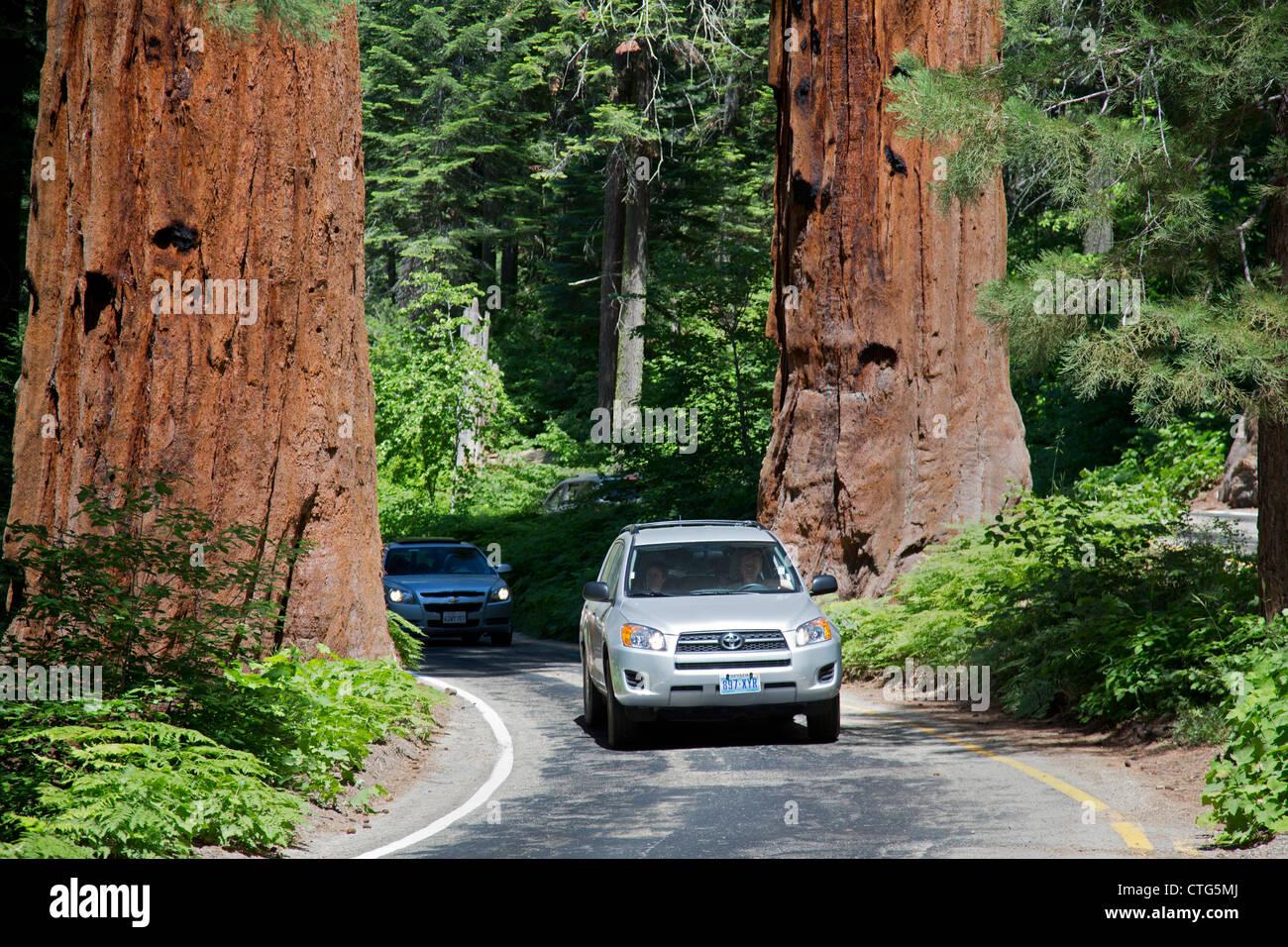 Sequoia national park california cars drive between two for Log cabin sequoia national park
