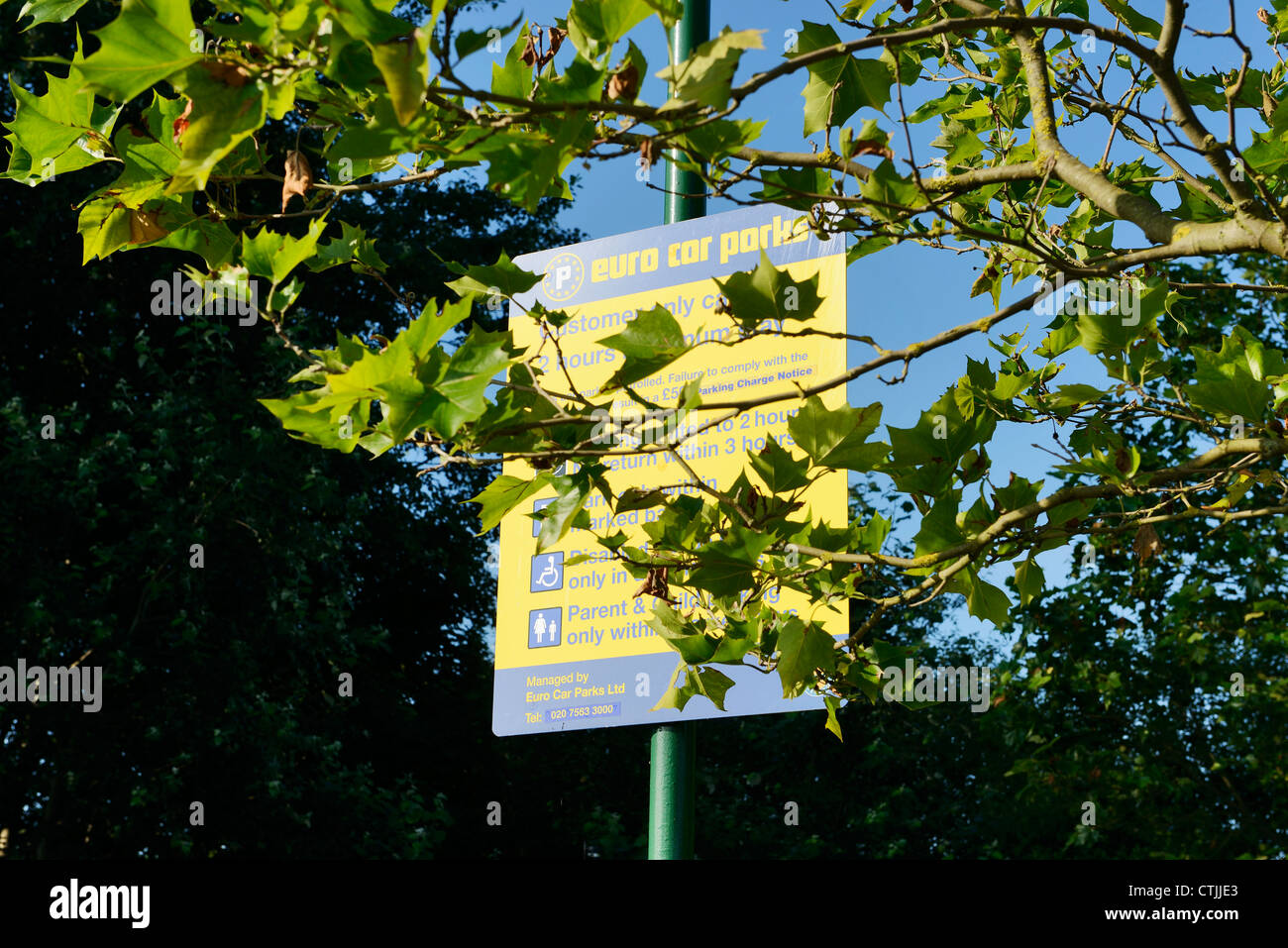 Car Park Sign Hidden By Tree Branches Stock Photo Royalty Free