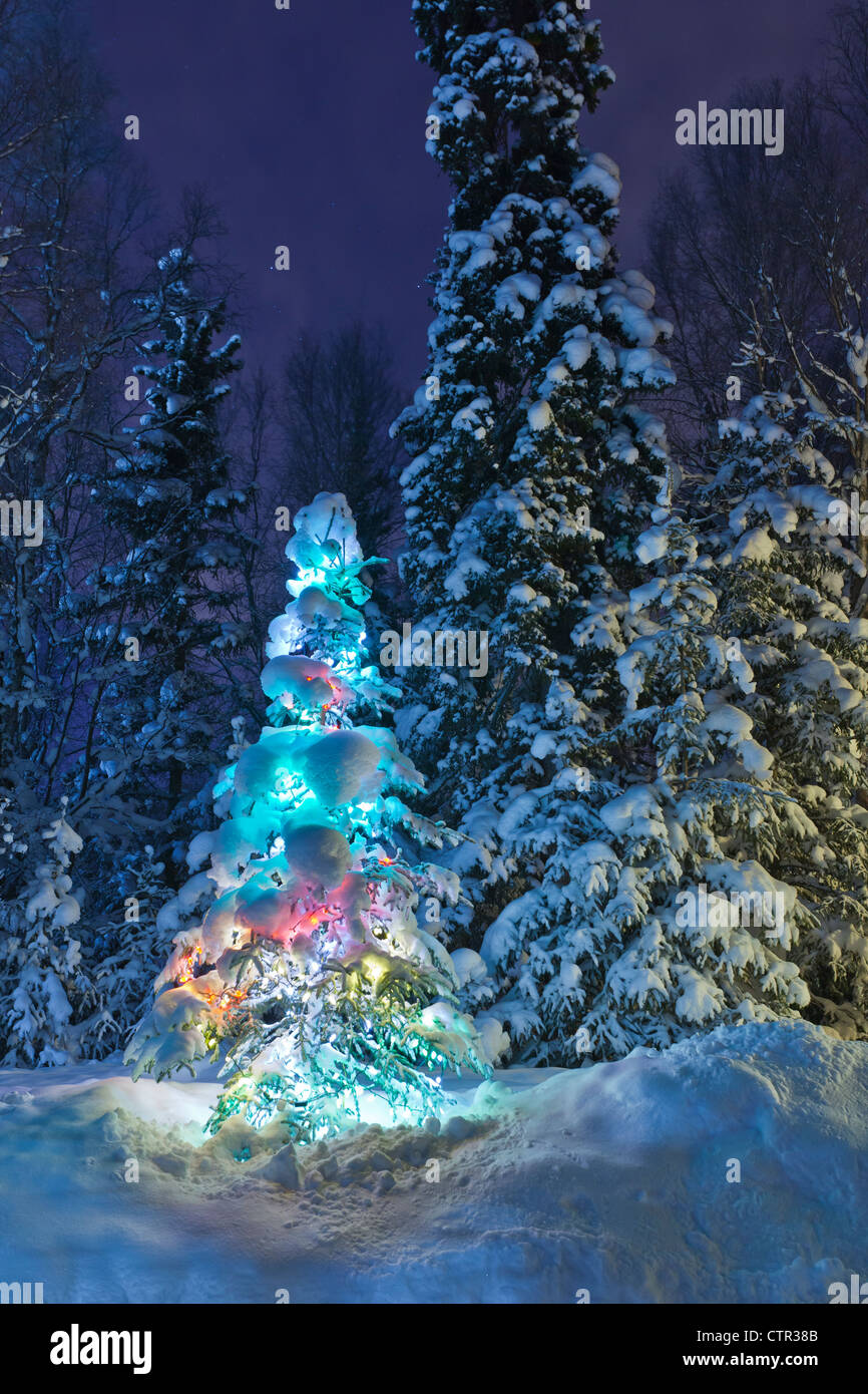 Snow covered lit Christmas tree on the edge of a forest at dusk ...