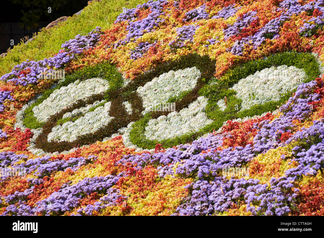 Flower Beds With Plants Arranged