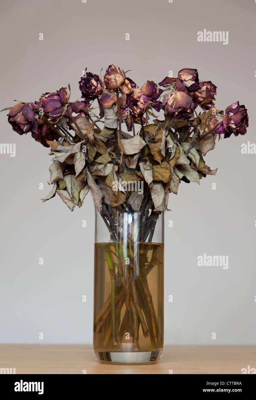 Vase of dead flowers still life concept stock photo royalty vase of dead flowers still life concept reviewsmspy