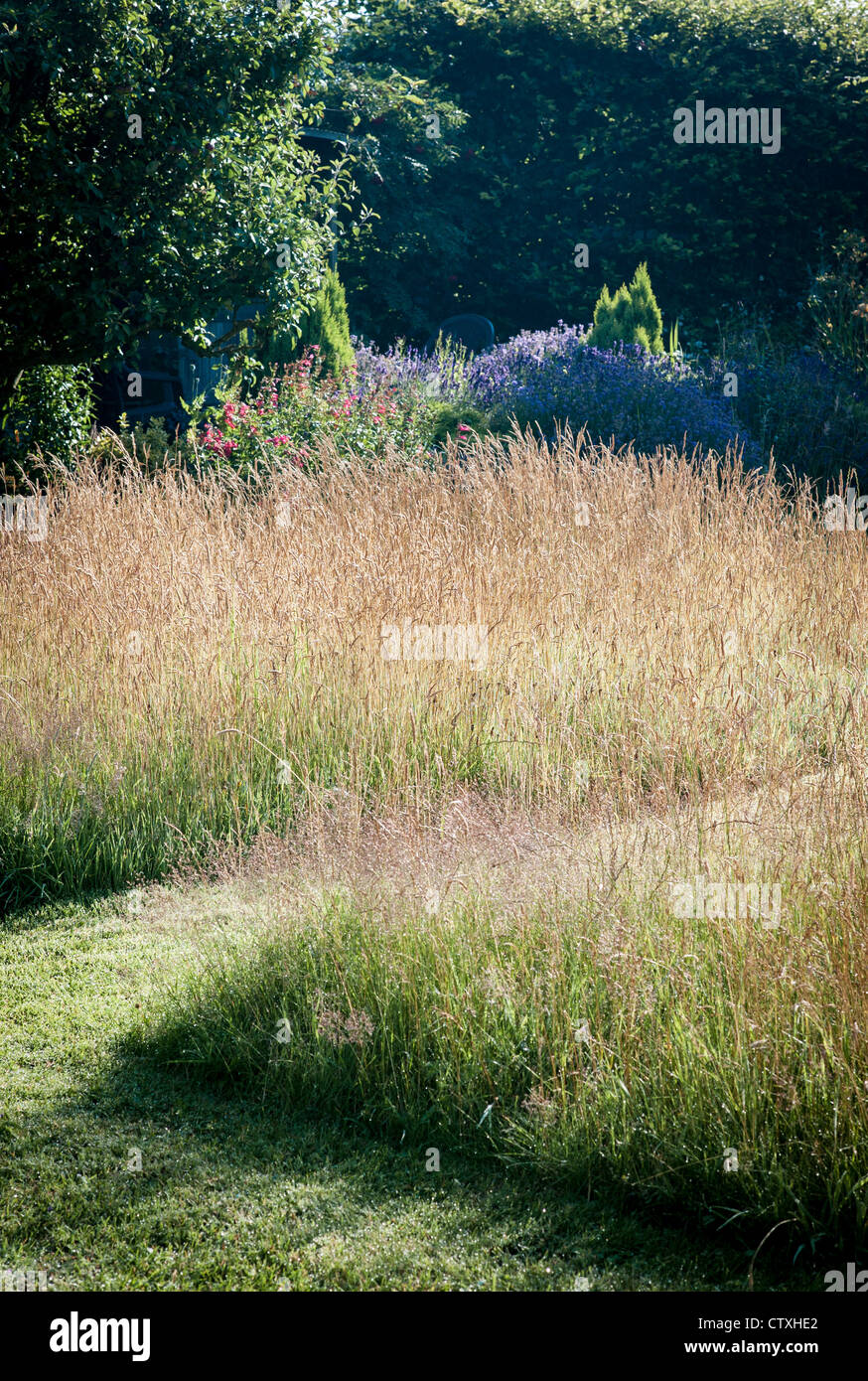 Wild grass lawn with paths in an english country garden for Wild grass gardens