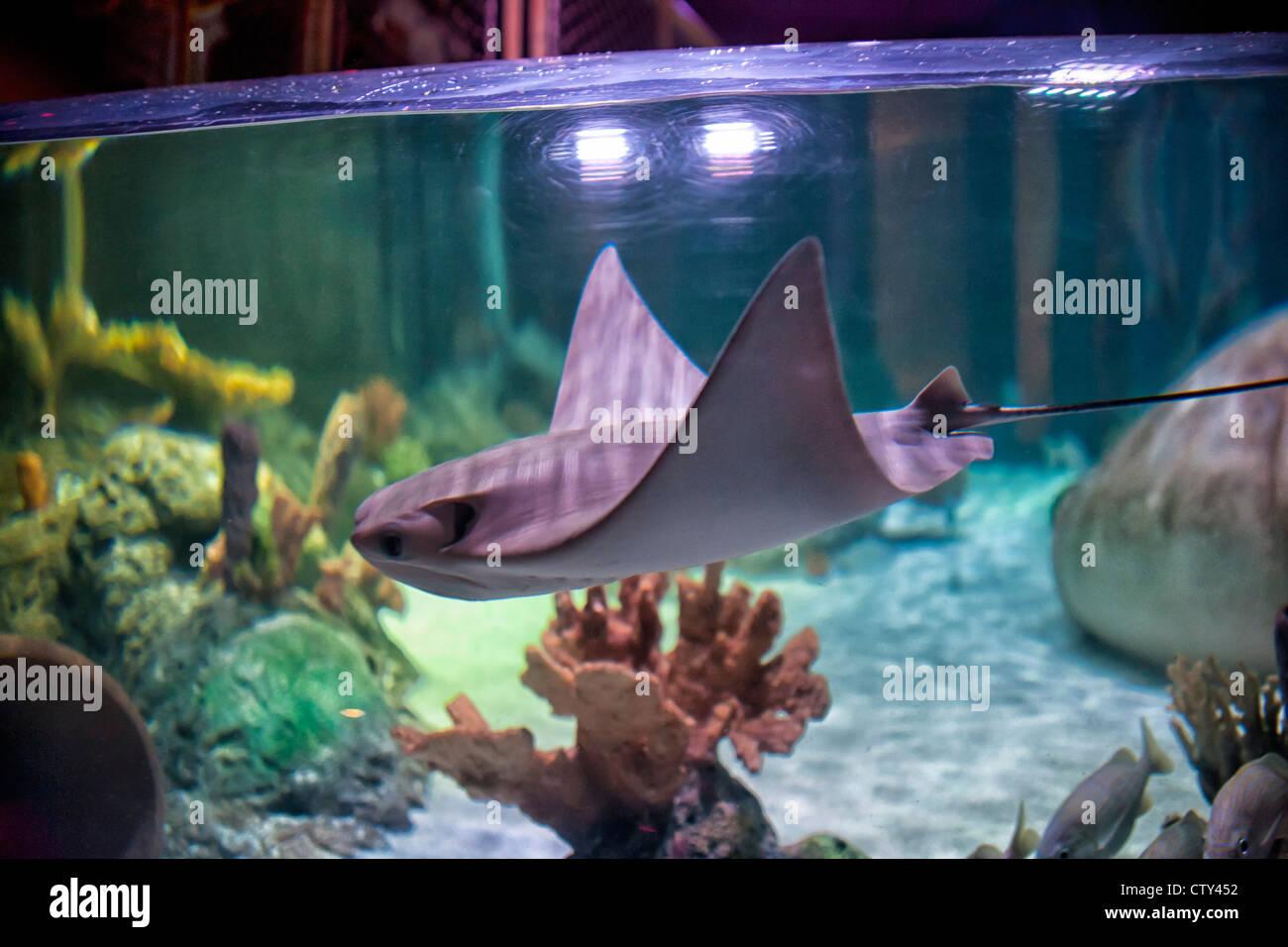 Freshwater fish kansas city - Sea Life Kansas City Aquarium