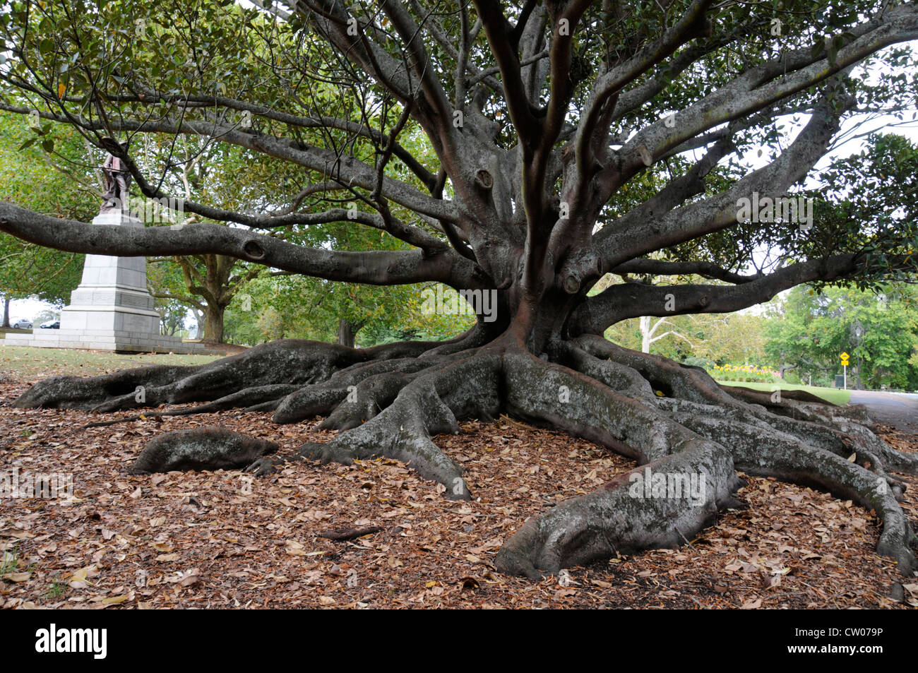 fig tree christian dating perth Sermonaudiocom - the parable of the barren fig tree sign in or signup: radio streams sa radio 24/7 radio stream christian dating • pastor jeremiah j.