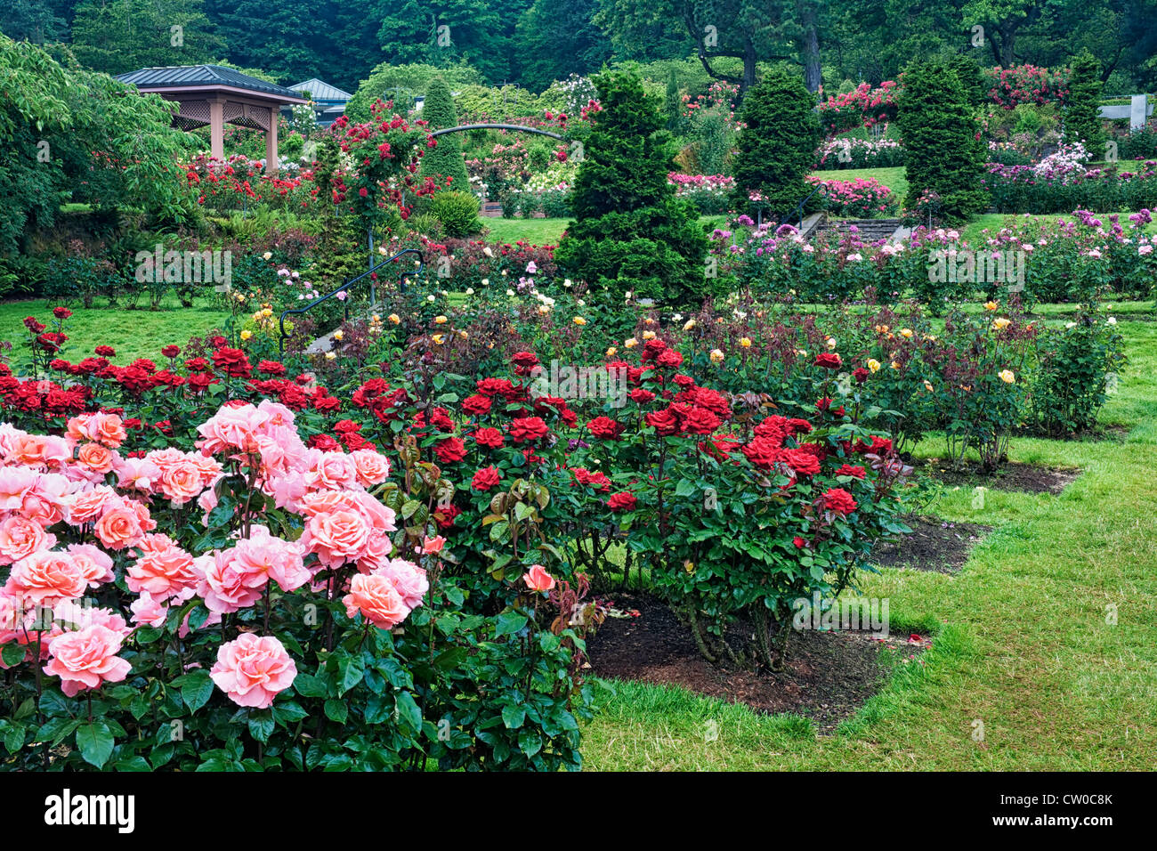 Portland s international rose test garden in washington park displays stock photo royalty free for Portland international rose test garden