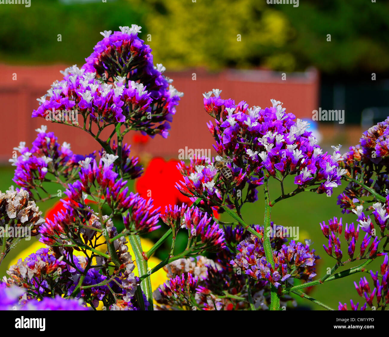 insects bees purple flowers HD wallpaper