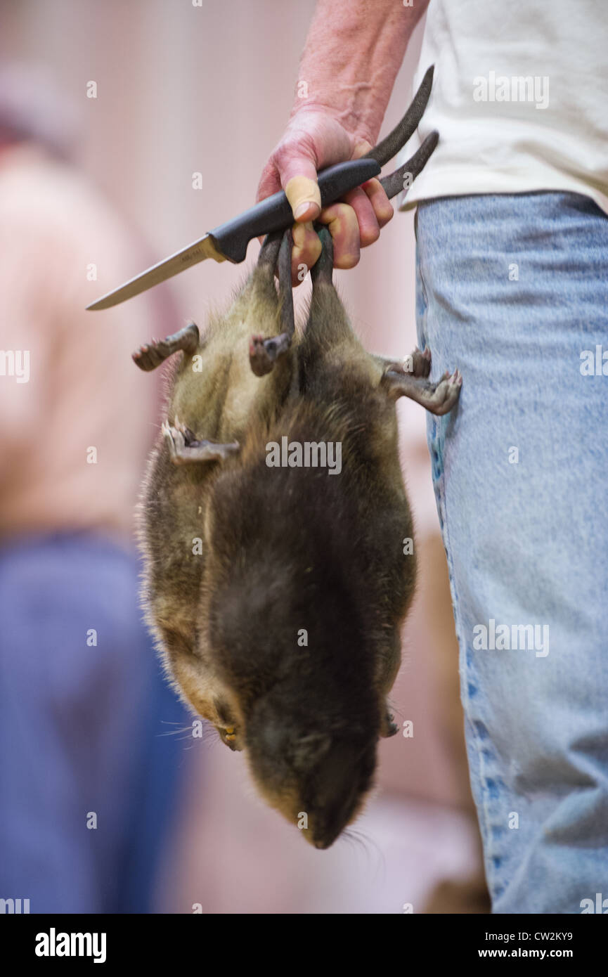 Muskrat Skinning | Trapping Archives