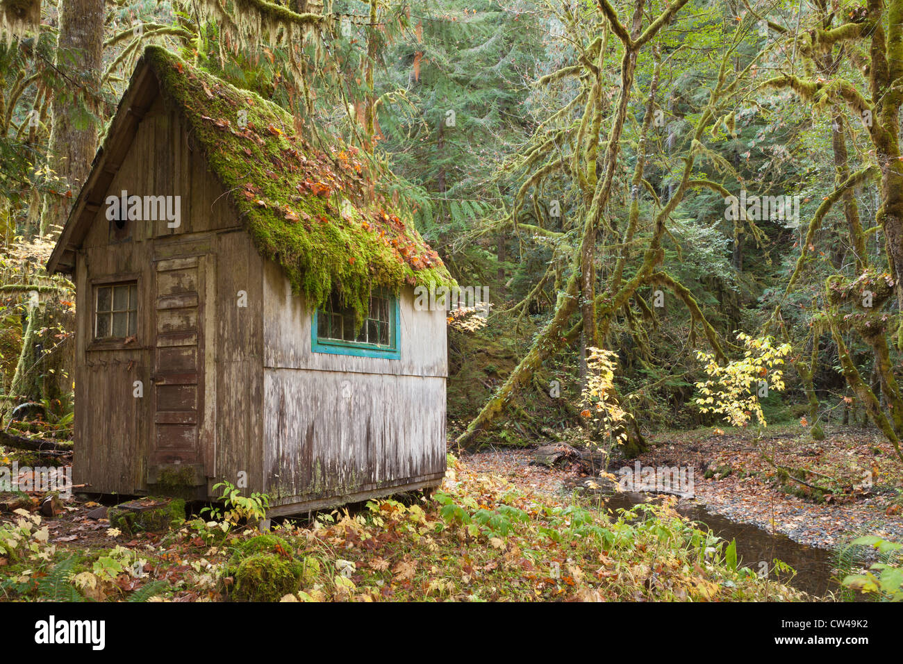 Old Cabin In A Forest Olympic National Park Washington