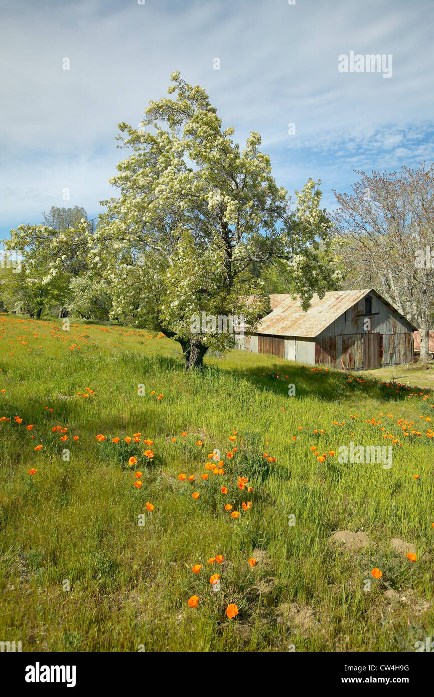Old barn next to a colorful bouquet of spring flowers and california old barn next to a colorful bouquet of spring flowers and california poppies near lake hughes ca mightylinksfo