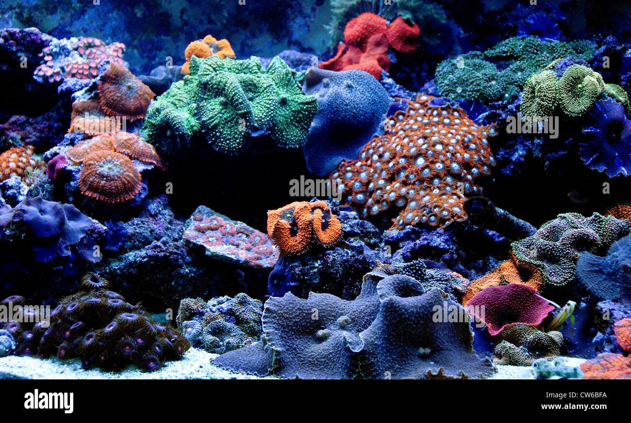 Coral Reef Aquarium Designed For Keeping Corals That Show