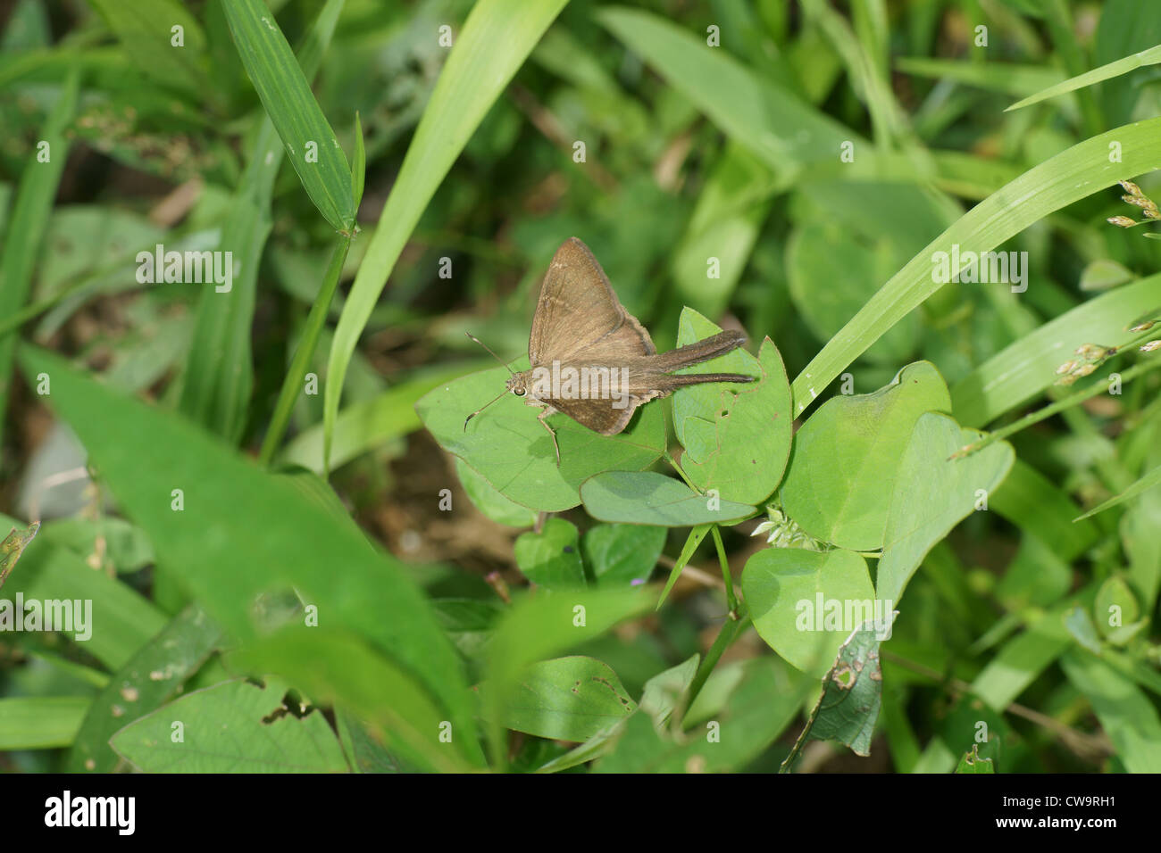 moth on leaf stock photo royalty free image 50003213 alamy