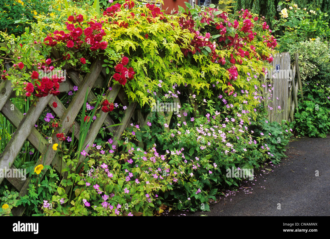 Trellis with climbing roses front garden picket fence red for Climbing flowering plants for fences