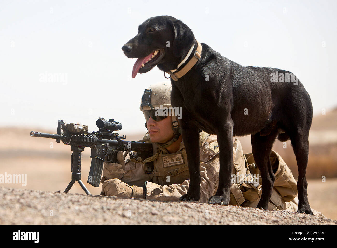 A US Marine dog handler and point man with Ace, an improvised ...