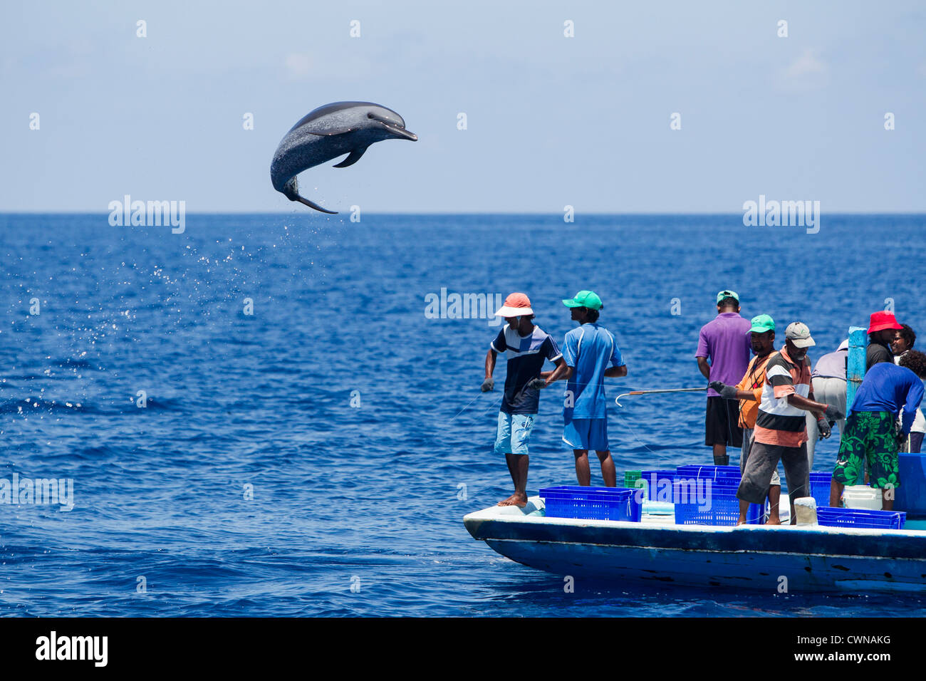 Pantropical spotted dolphin pole and line fishing boat for Free line fishing