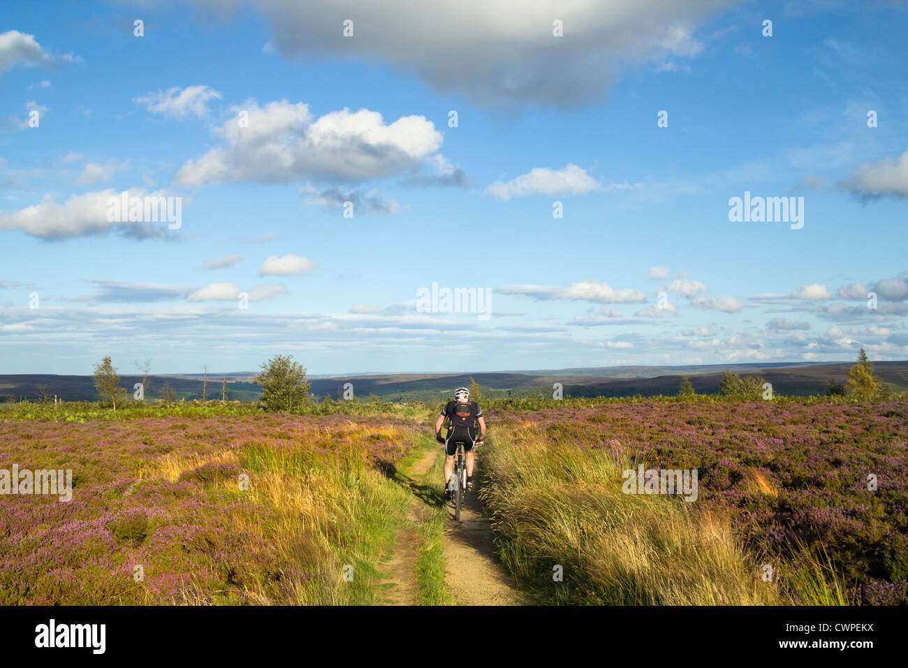 Mountain Biking On Easby Moor Near Captain Cook S Monument North