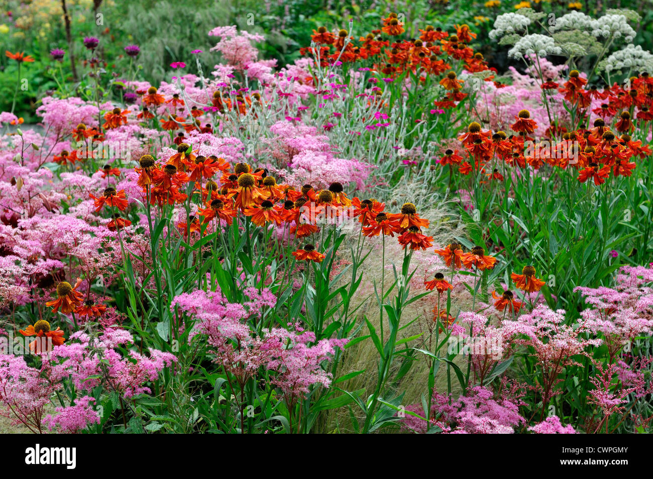 late summer early autumn herbaceous perennial bed border