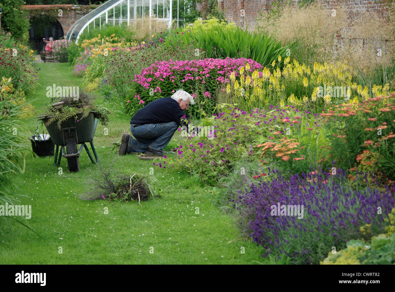 Male Gardener Weeding A Mixed Border In An English Country