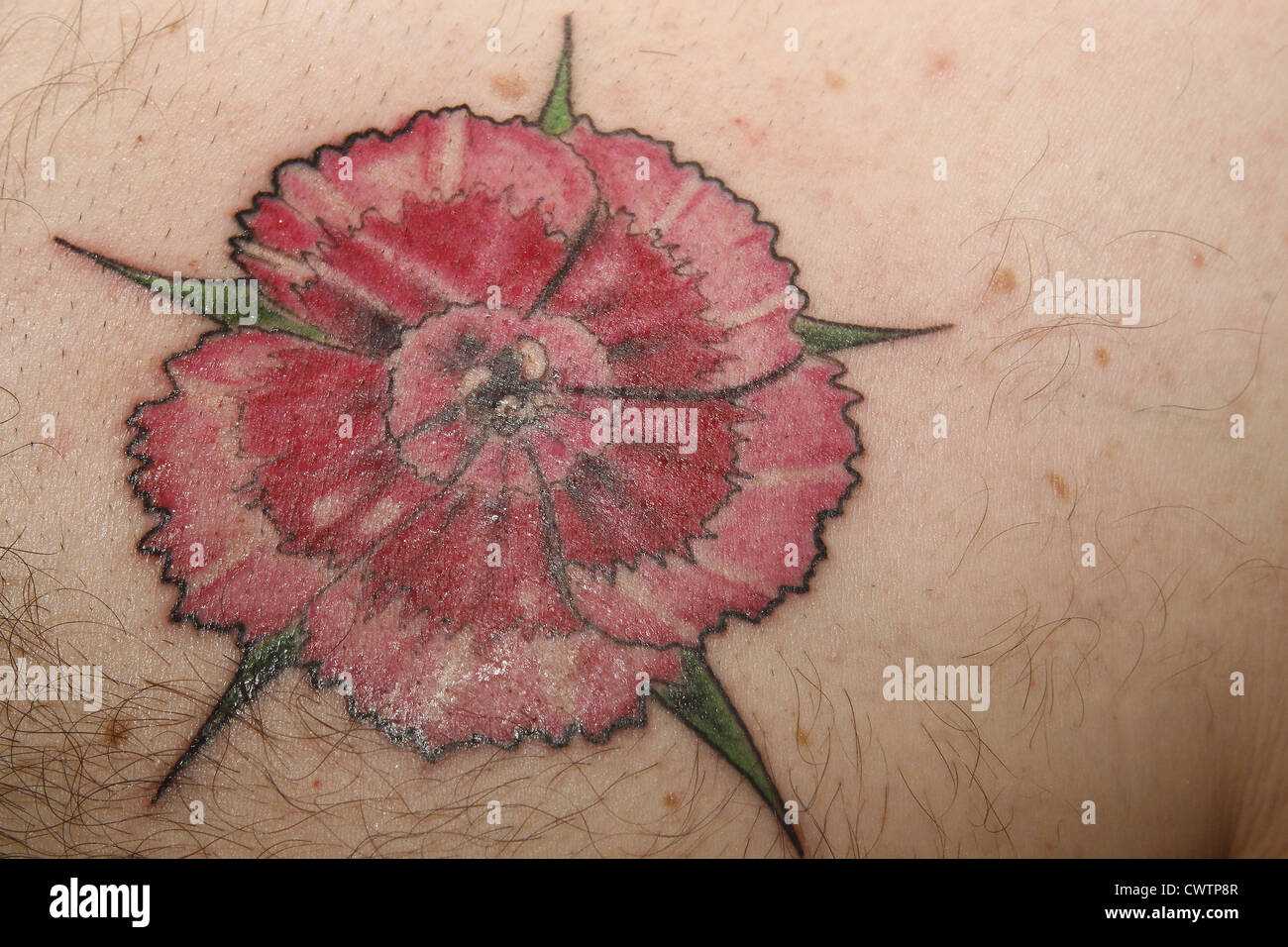 sweet william flower tattoo on man 39 s chest stock photo royalty free image 50331479 alamy. Black Bedroom Furniture Sets. Home Design Ideas