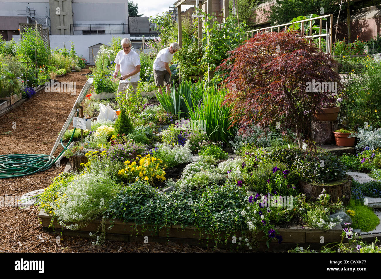 urban garden gardening working in the community garden in davie stock photo royalty free. Black Bedroom Furniture Sets. Home Design Ideas