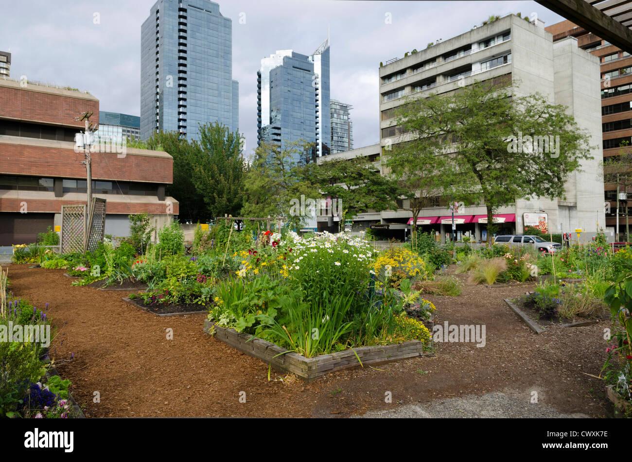 Urban Backyard Golden : Small Urban Garden With Golden Elm Bloodgood And Mixed Pots Part Of