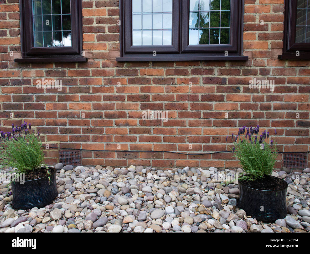 Two potted plants set on pebbles in front of a london for Plants for front of house