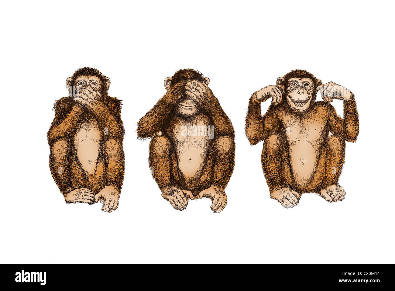 illustration drawing three wise monkeys see hear
