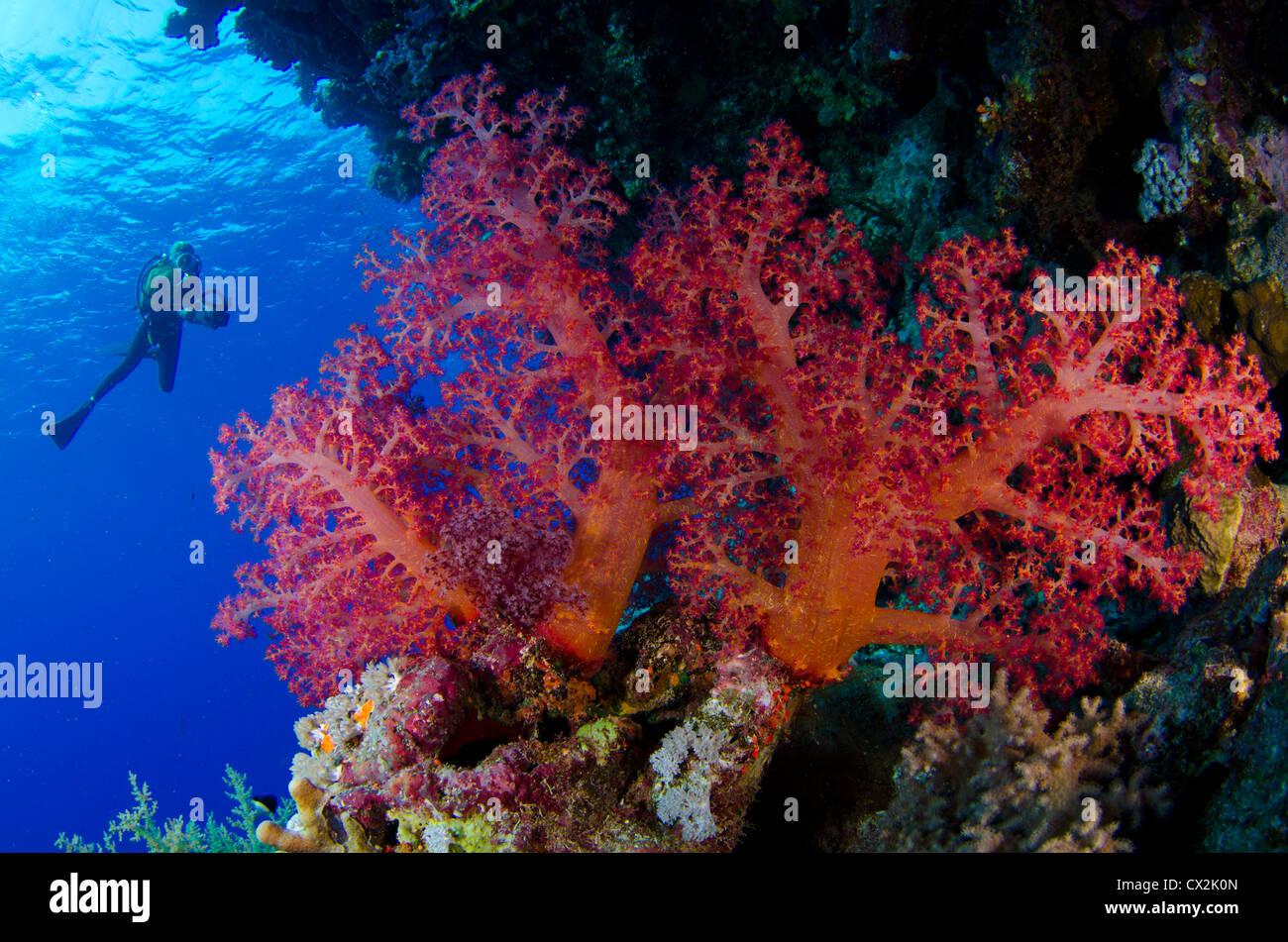 red sea underwater coral reef sea life marine life ocean