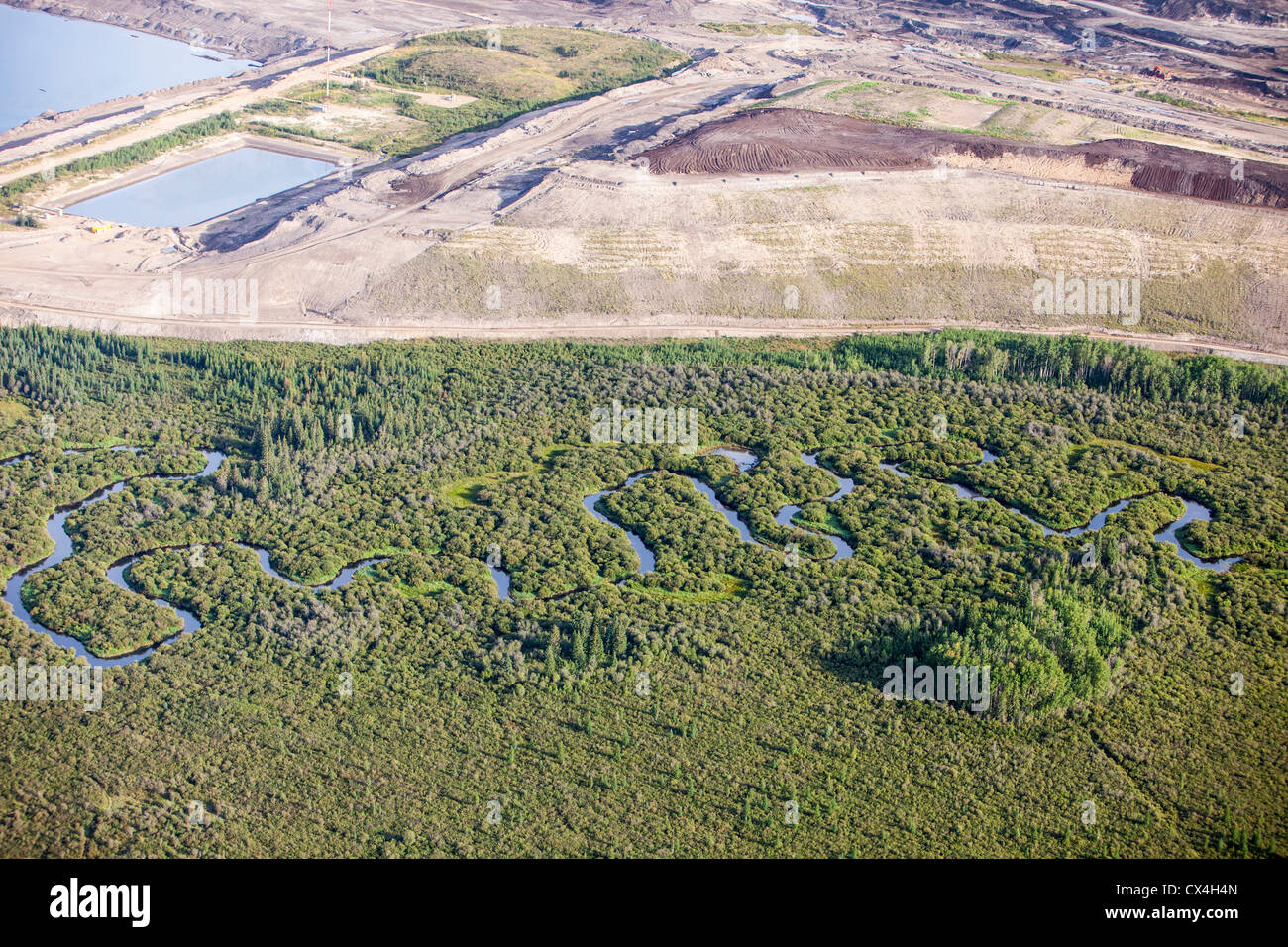 boreal-forest-trees-clear-felled-to-make