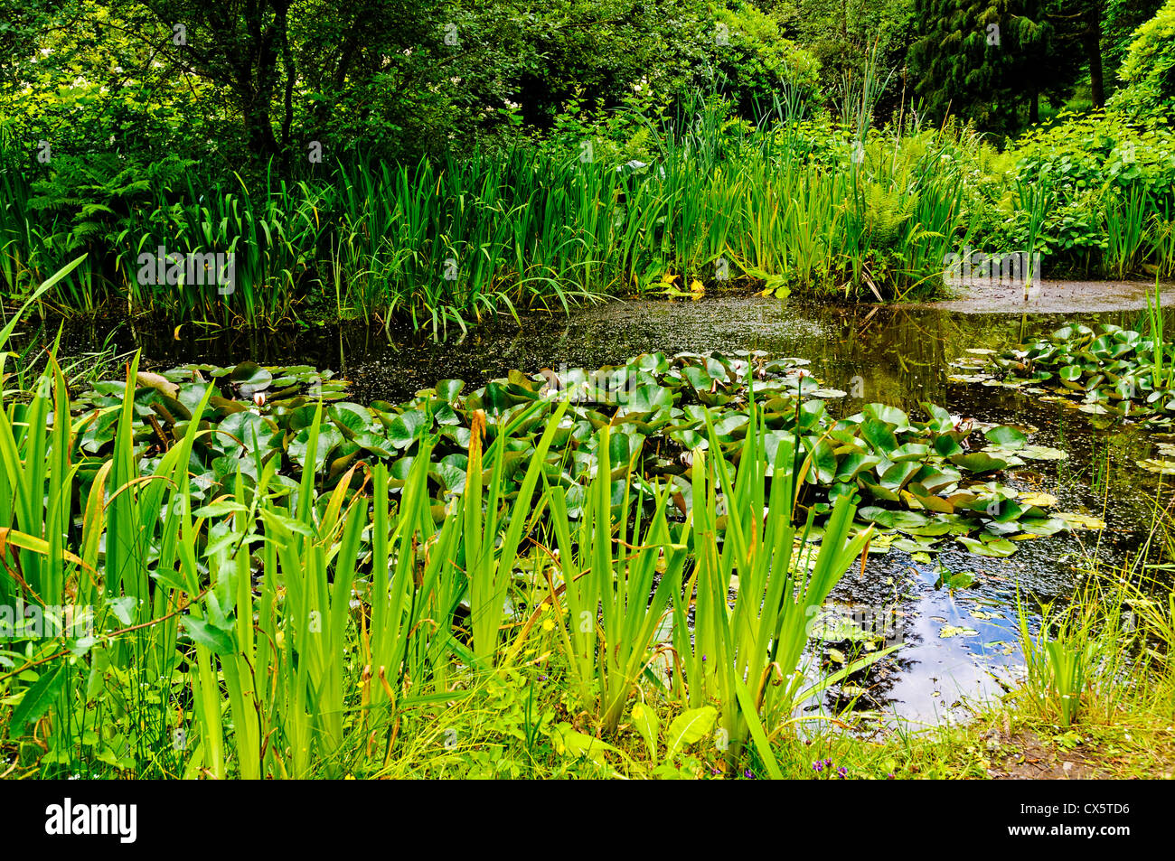 A tree lined freshwater pond supporting luxuriant verdant for Freshwater pond plants
