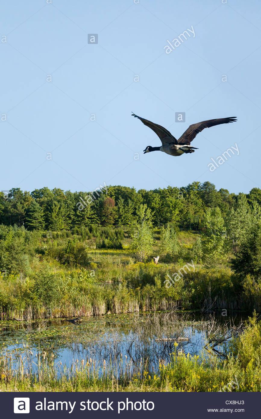 canada goose toronto ontario