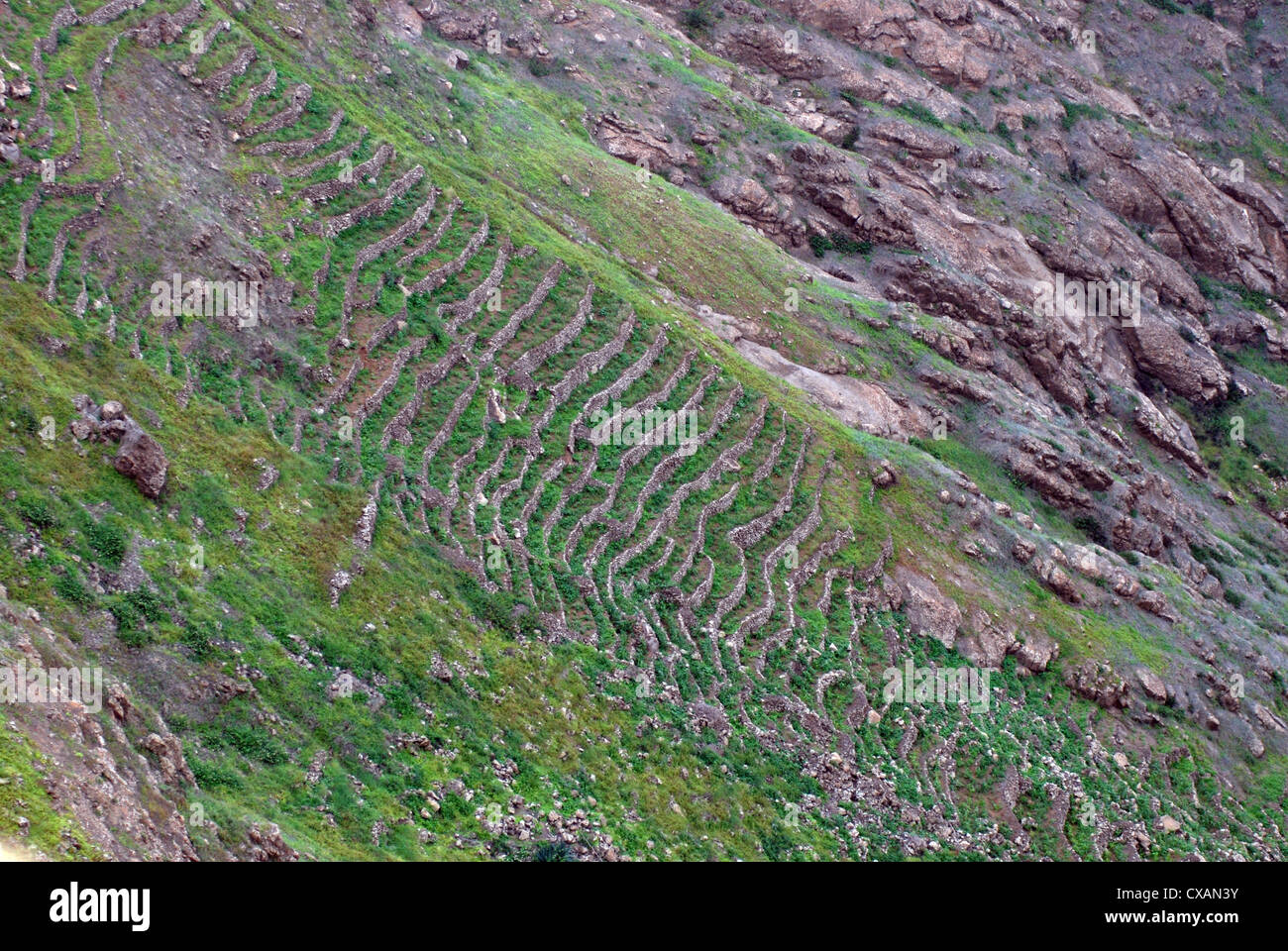 Terrace farming on steep rugged and exposed mountain for Terrace farming model